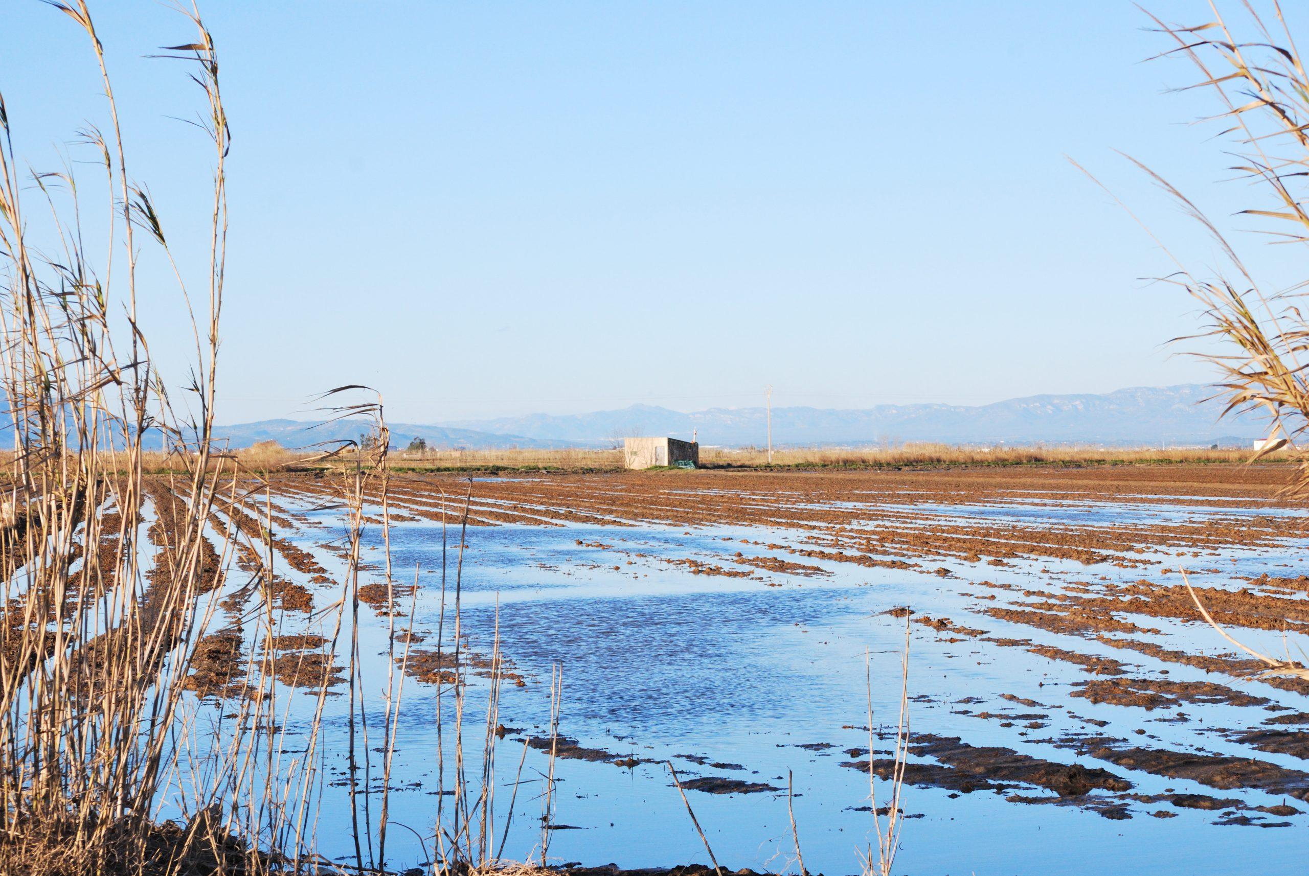 El Delta del Ebro. La leyenda del río que quiso ser mar